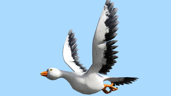 bird animation max