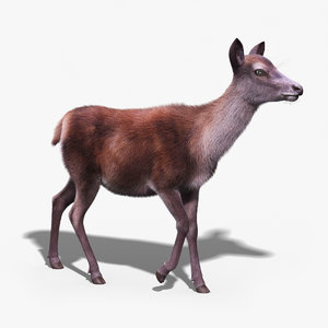 red deer doe fur 3d model