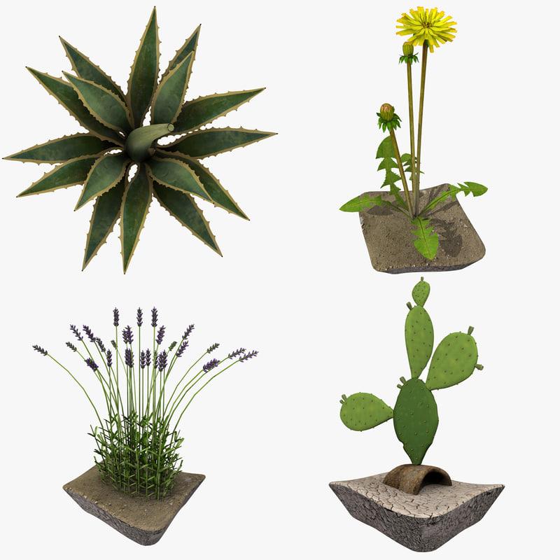3d plants agave cornelius model