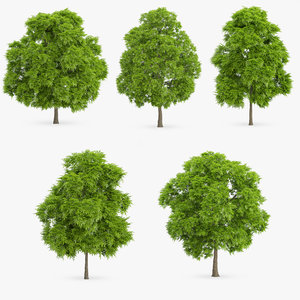 american chestnut trees 3d model
