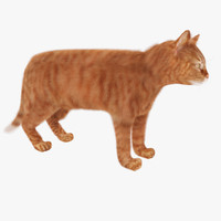 3ds max red cat feline