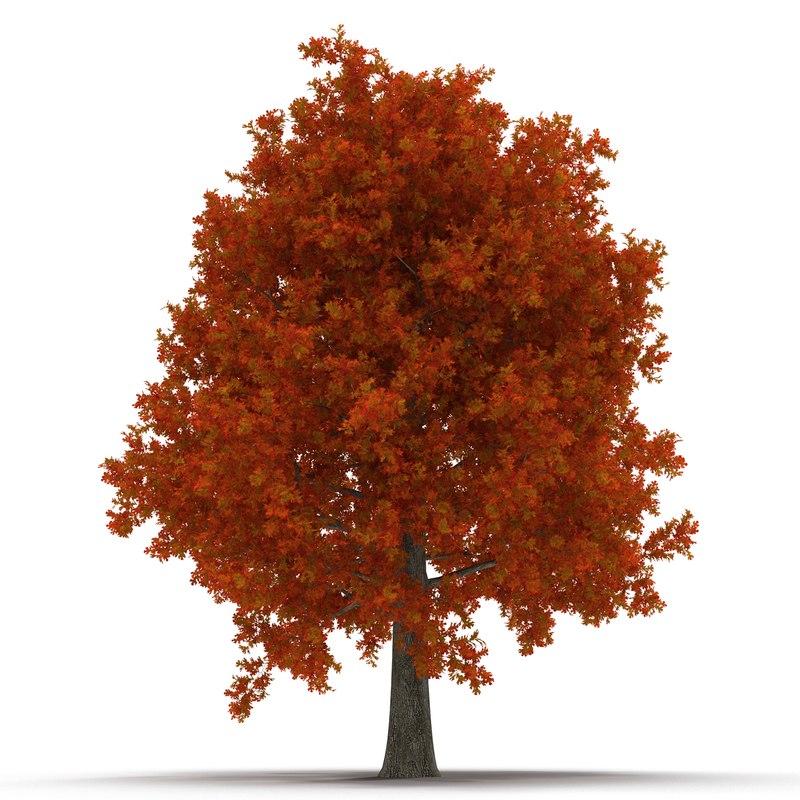red oak tree autumn 3d model