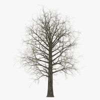 3ds max red oak tree winter