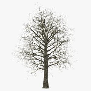 3ds max red oak tree winter