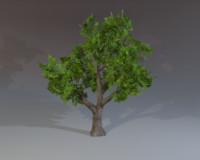 ready tree maps 3d max