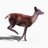 Red Deer Doe(FUR)(ANIMATED)