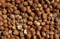 Nut_Texture_0003