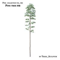 ma pine tree