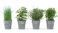 herbs max