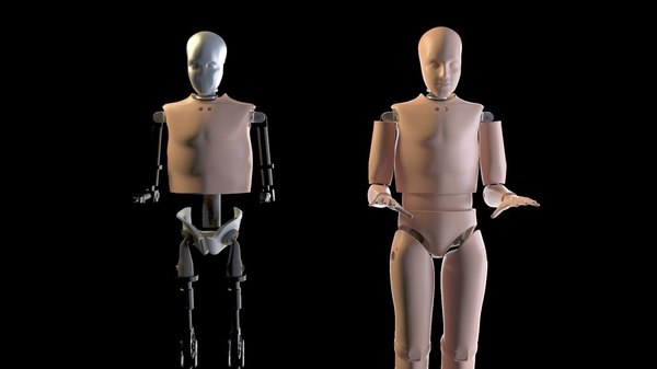 crash test dummy male human 3d max