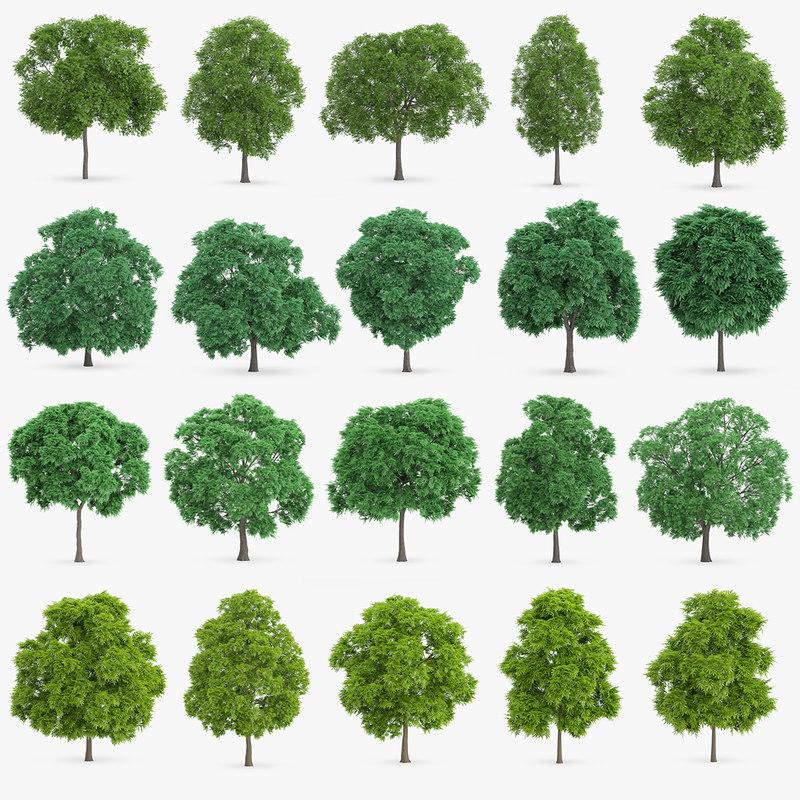 chestnut trees c4d