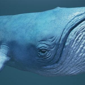 blue whale 3d x