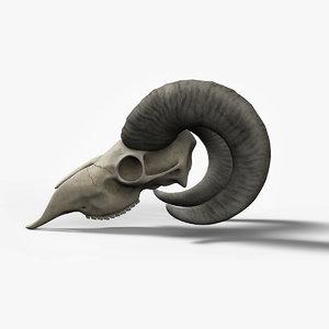 3d goat skull