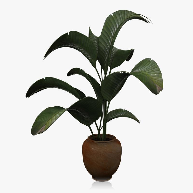 banana house plant 3d max