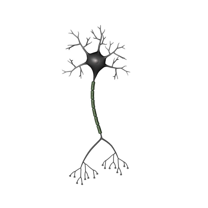3d brain neuron