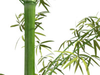 3ds max bamboo plants
