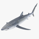 blue shark 3D models