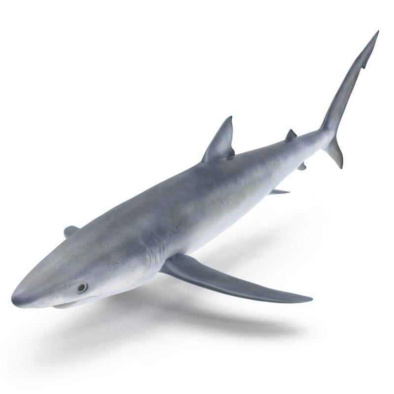 3d blue shark model