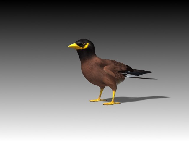 maynah bird rigged 3d max