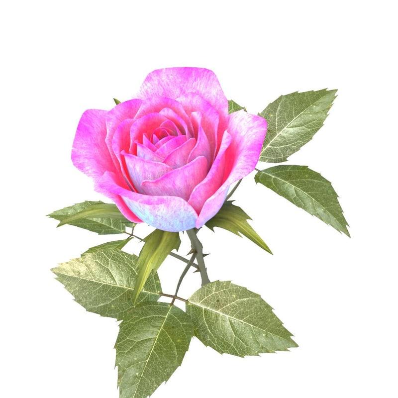 rose pink v2 02 3ds