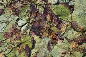 Flora_Texture_0007