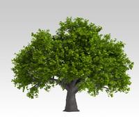 oak 3d model