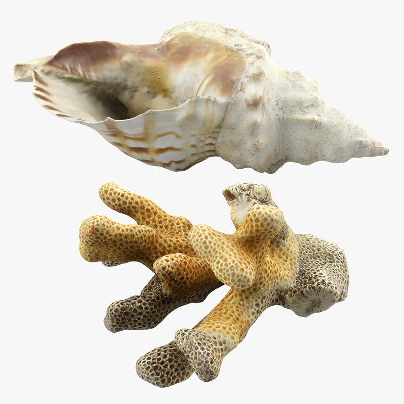 seashell coral 3d max
