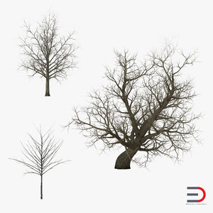 3d model winter red maple trees