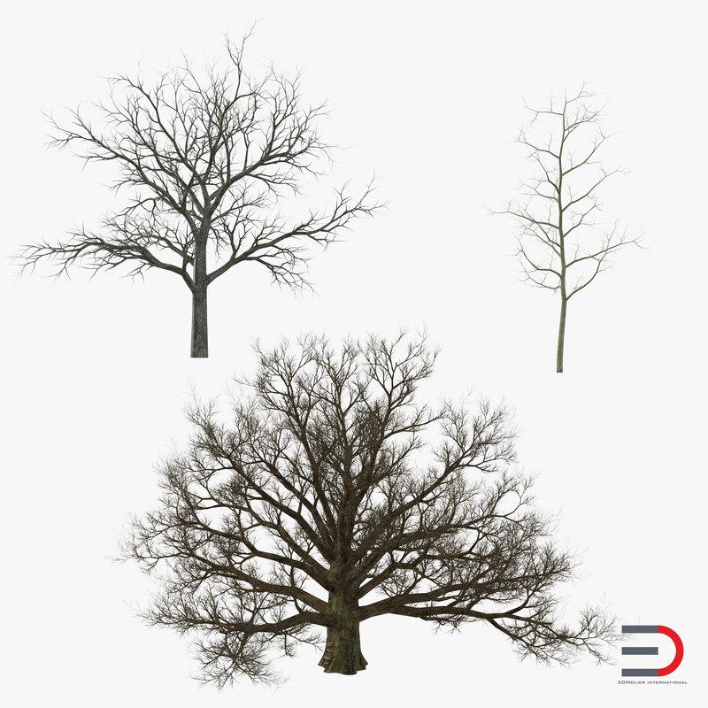 max winter white oaks trees