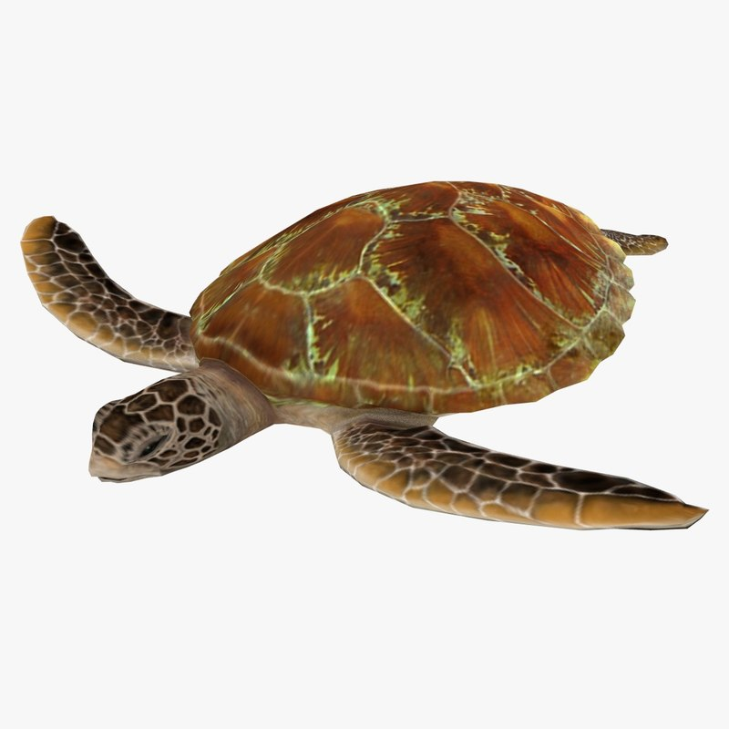 3d turtle ready games