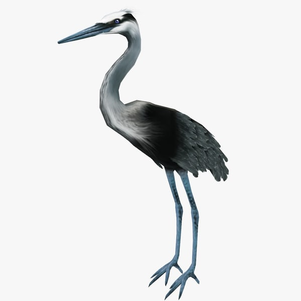 3d heron ready games model