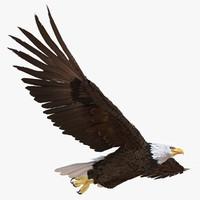 Bald Eagle Pose 3