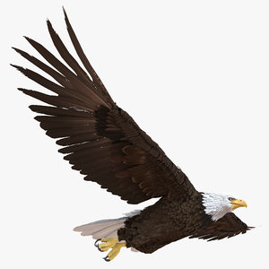 bald eagle pose 3 3d max