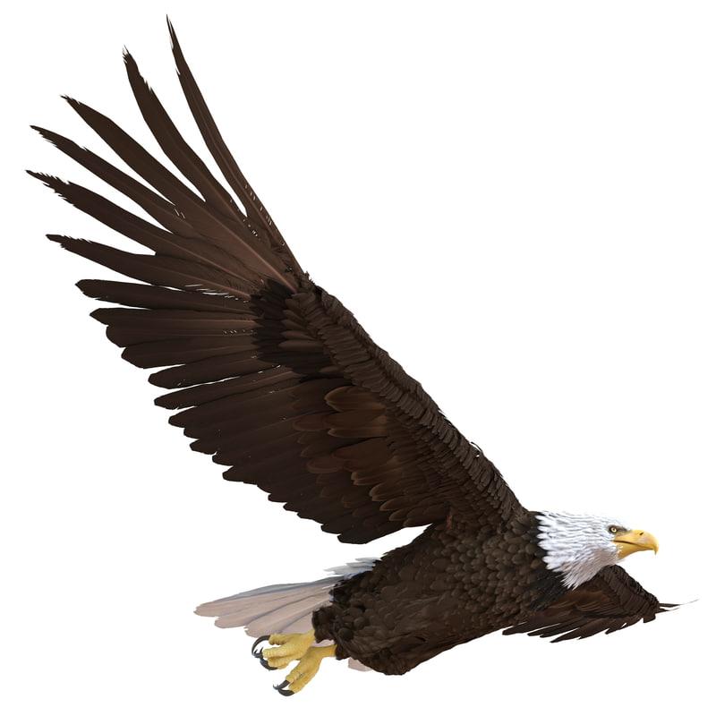 bald eagle pose 3 3d max