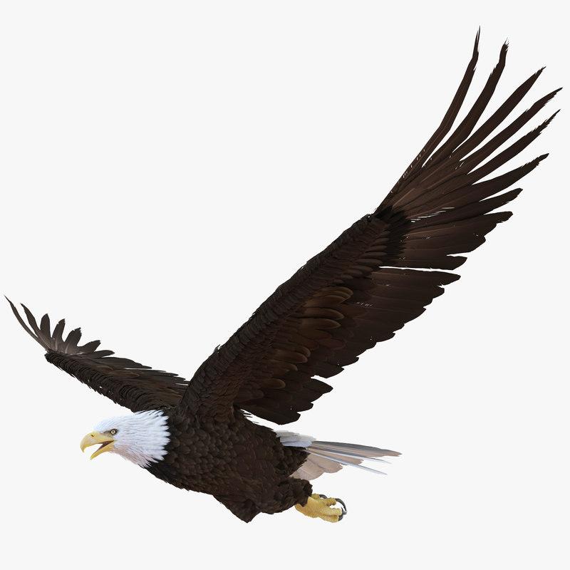 3ds max bald eagle pose 4
