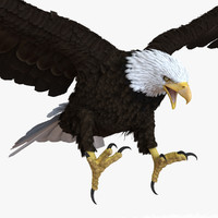 bald eagle pose 2 3d max