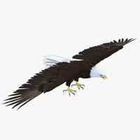 max bald eagle
