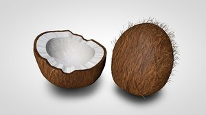 coconut coco nut 3d model