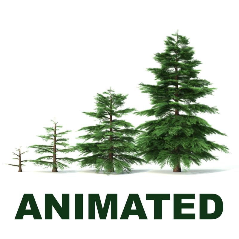 fir tree animation 3d c4d