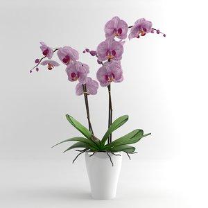 3d model orchid