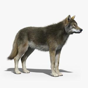 3d model gray wolf 2 fur