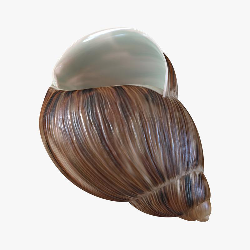 3d marginata shell model