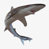 school shark pose 2 3d 3ds