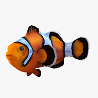 clownfish pose 2 3d model
