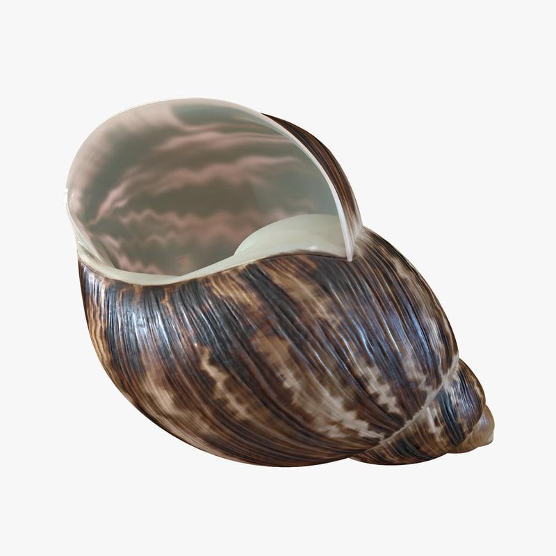 3ds marginata shell 2