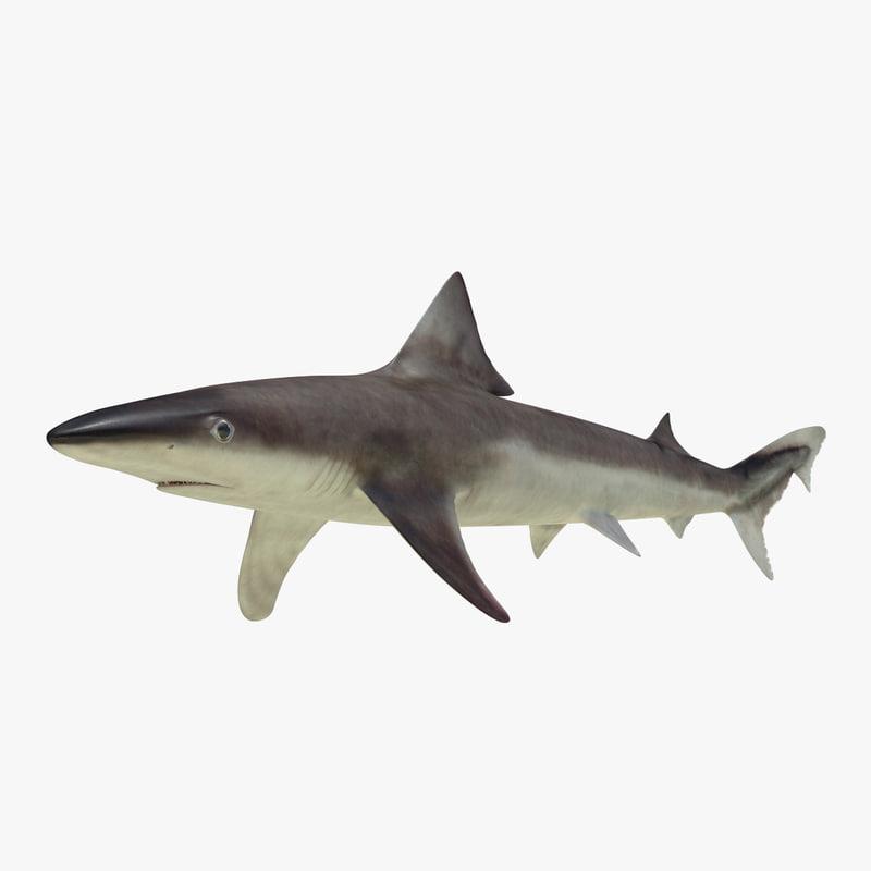 3ds max school shark
