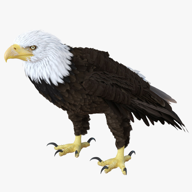 eagle standing pose modeled 3d 3ds