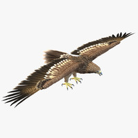 3d imperial eagle model
