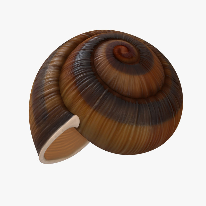 3d model snail shell