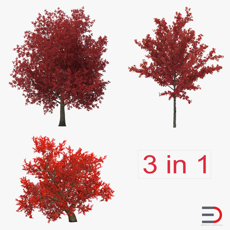 3d autumn red maple trees